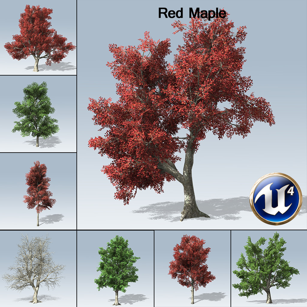 Red Maple Ue4 Speedtree