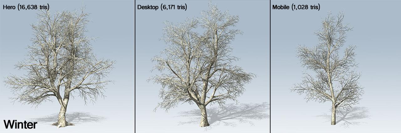 Maple trees in winter