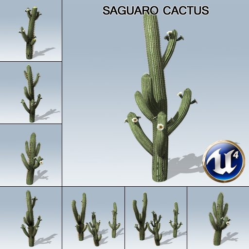 saguaro_cactus_product_with_7_variations