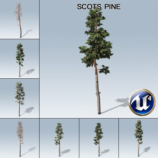 scots_pine_product_with_7_variations
