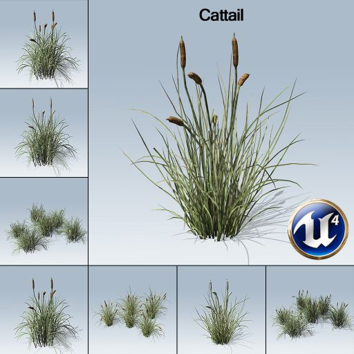 Cattail_product_with_7_variations