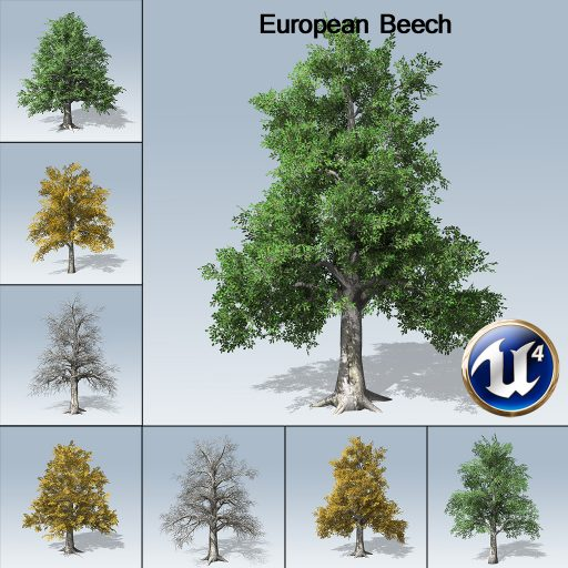 european_beech_with_7_variations