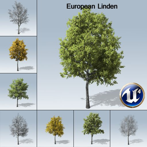 european_linden_with_7_variations