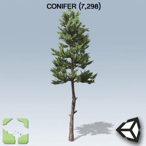 Conifer_Sample