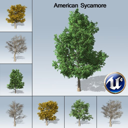 americansycamore_product_7_variations