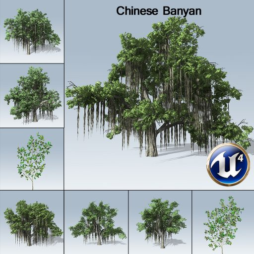 chinesebanyan_product_with_7_variations