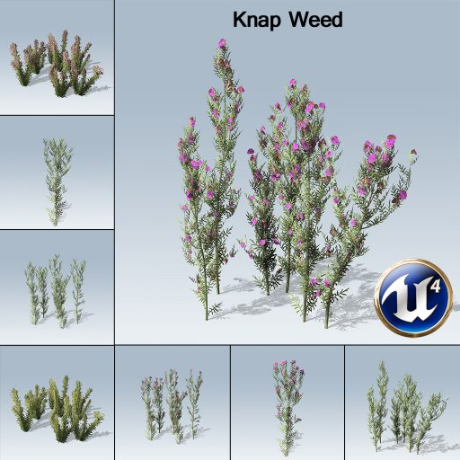 knapweed_product_with_7_variations