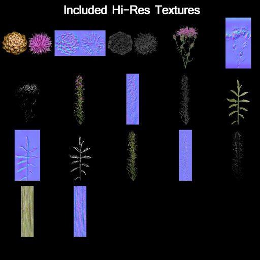knapweed_textures