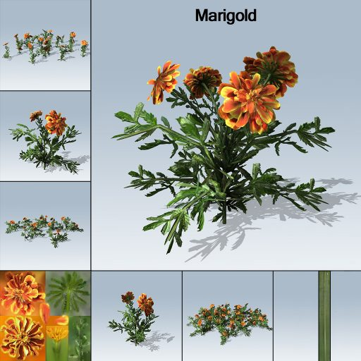 marigold_with_7_variations