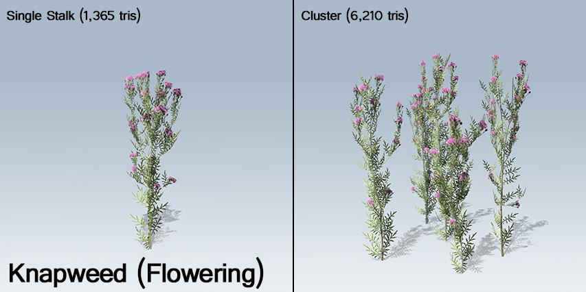 Knapweed_Flowering_banner