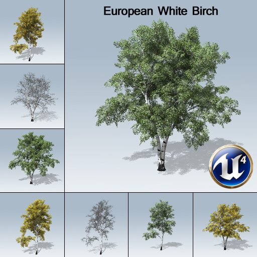 European_White_Birch_product_with_7_variations