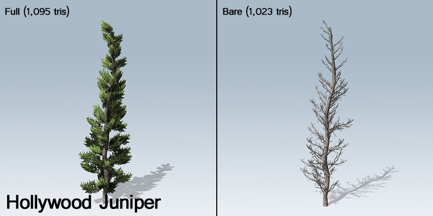 Hollywood_Juniper_banner