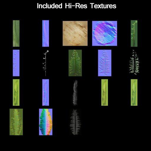 Western_Sword_Fern_textures