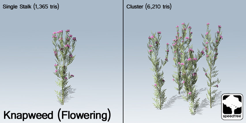 Knapweed_Flowering_banner