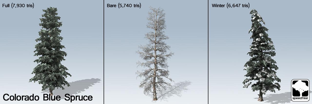 blue_spruce_banner
