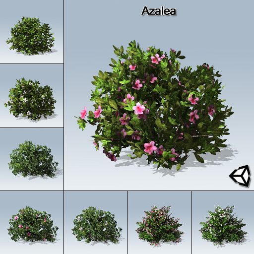 Azalea_with_7_variations