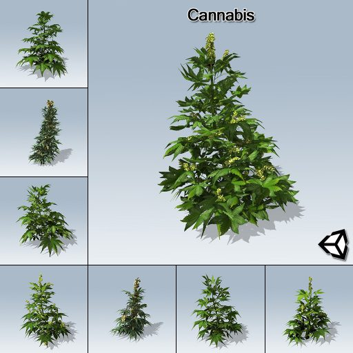 Cannabis_with_7_variations