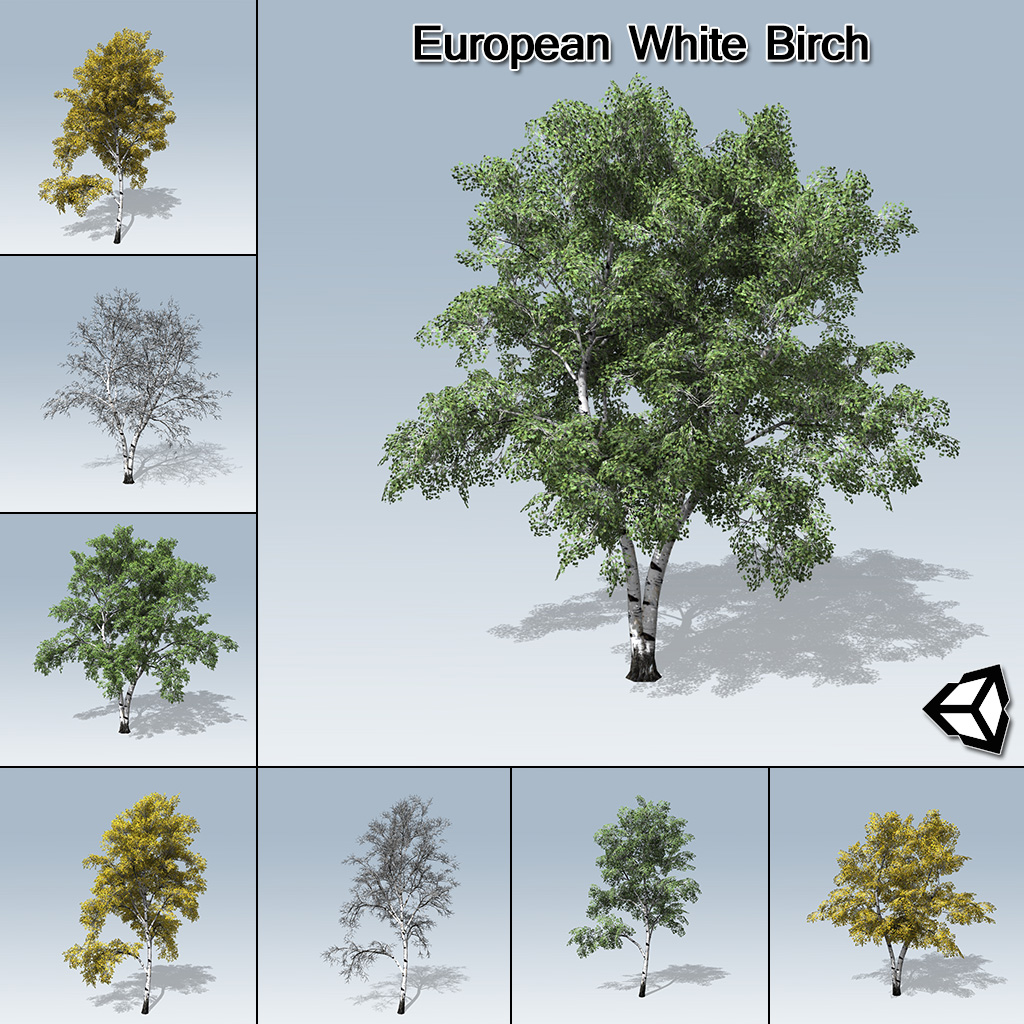 European_White_Birch_product_with_7_variations copy