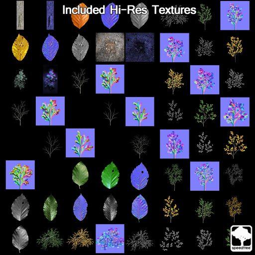 European_beech_textures