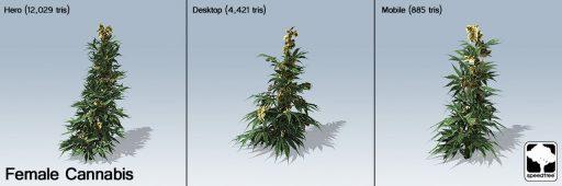 cannabis_version_3