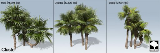 chinese_fan_palm_cluster