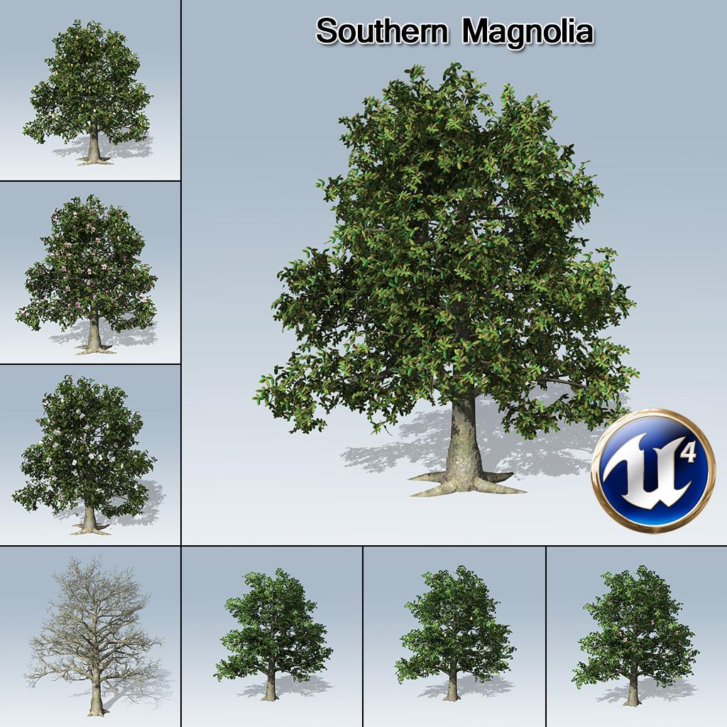 Southern Magnolia (UE4) - SpeedTree