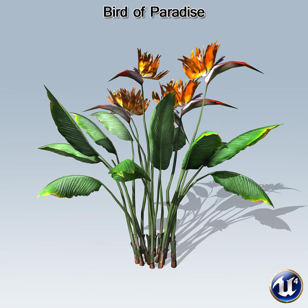 bird of paradise ue4 speedtree. Black Bedroom Furniture Sets. Home Design Ideas