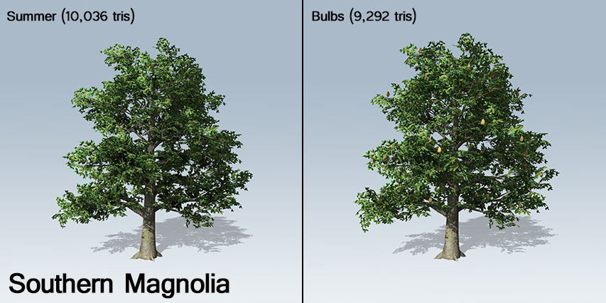 southern_magnolia_banner