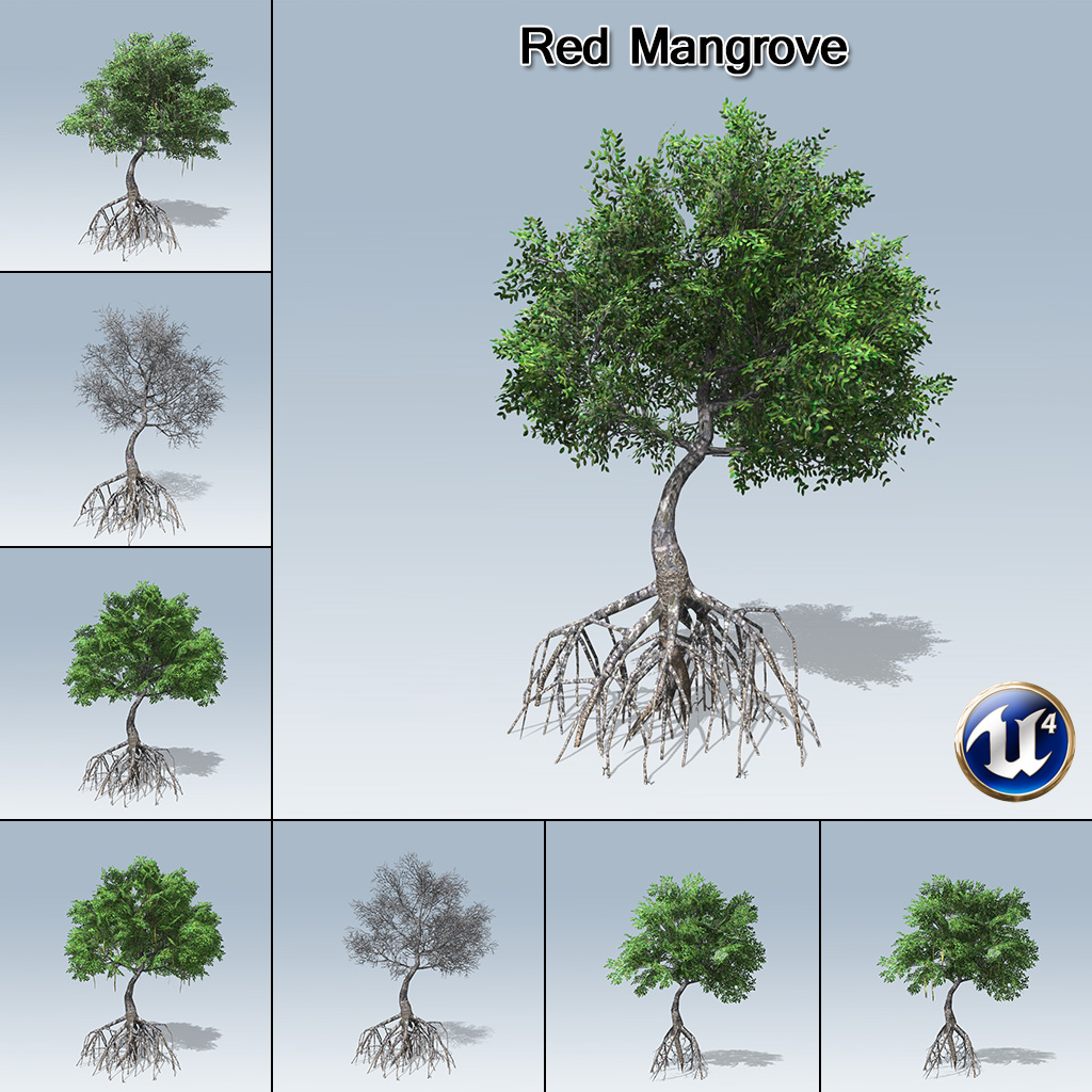 Red Mangrove (UE4) - SpeedTree