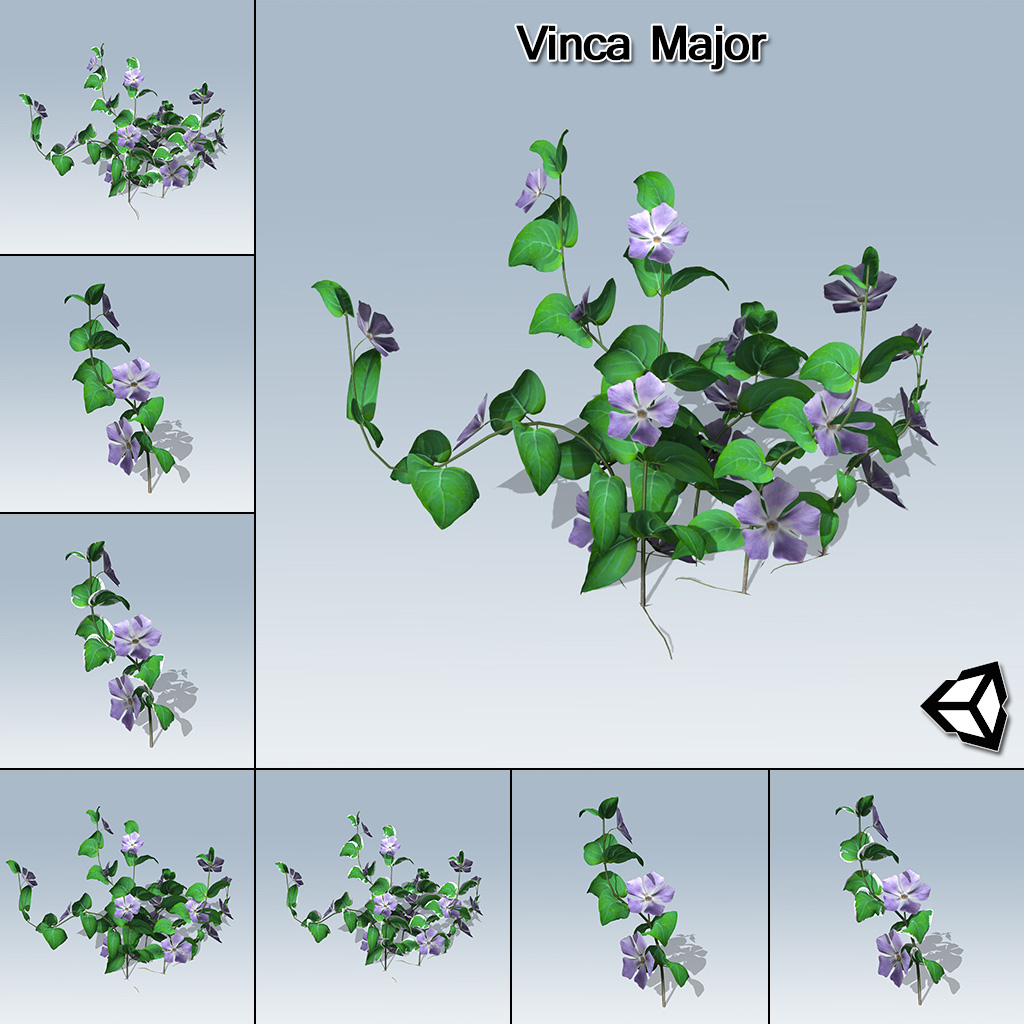 Vinca major unity speedtree for Vinca major