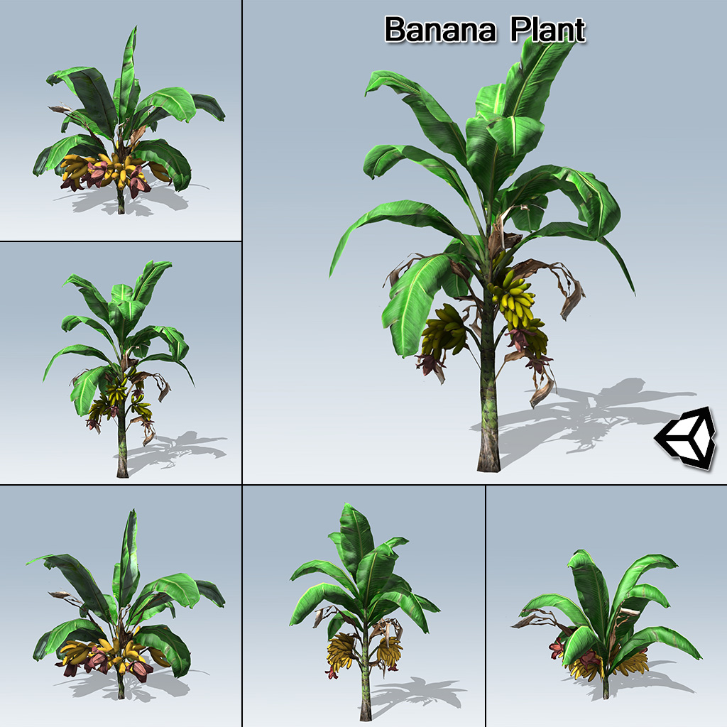 Variation In Plants Banana Plant (Unity) -...