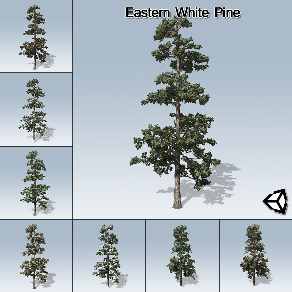 Unity Oregon Map.Eastern White Pine Unity Speedtree