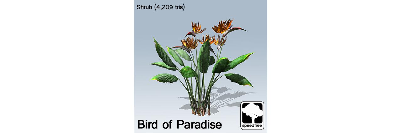 bird_of_paradise_banner