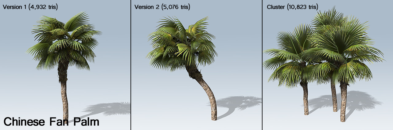 chinese_fan_palm_banner