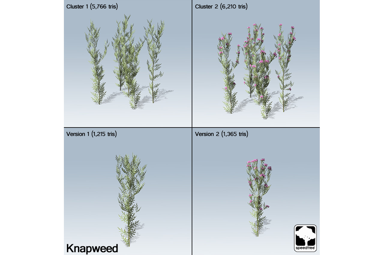 knapweed_banner