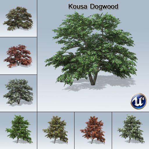 kousa_dogwood_product_with_7_variations