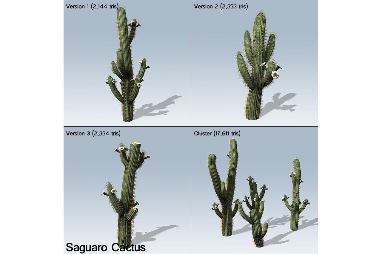 saguaro_cactus_banner