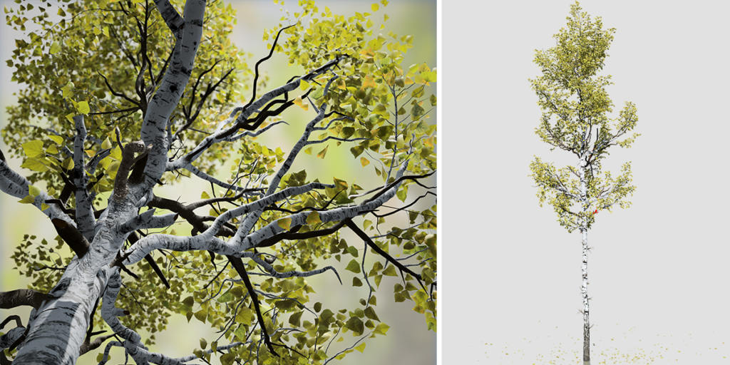 Quaking Aspen: Forest