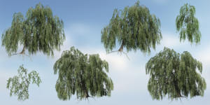Weeping Beech Species Pack (Games 8)