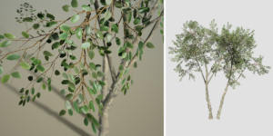 River Birch: Desktop Forest