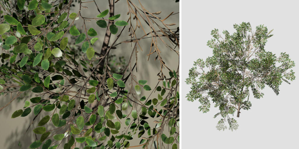 Barberry Bush Species Pack