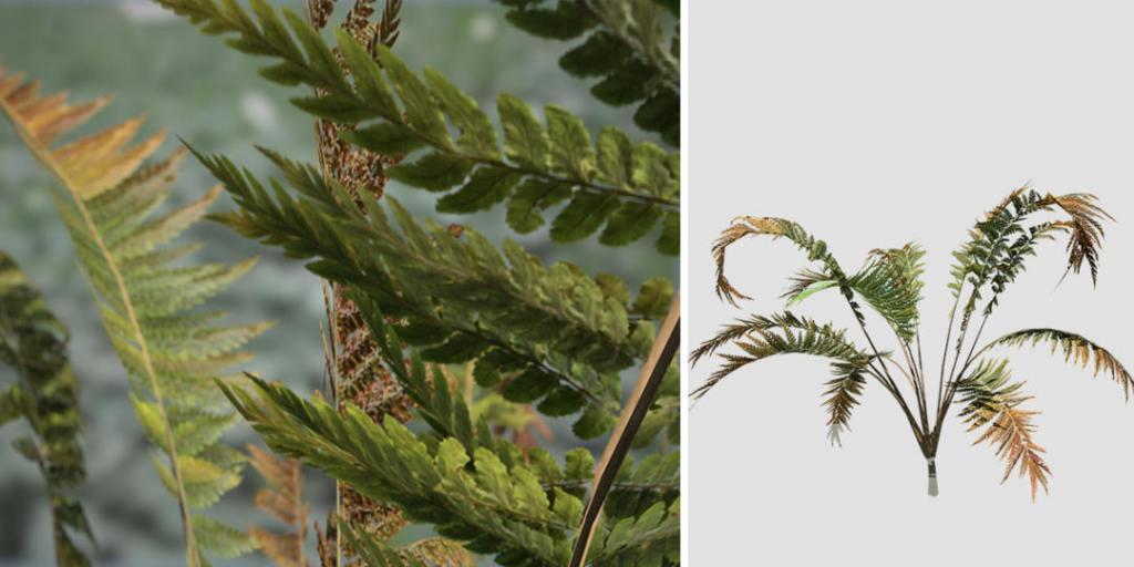 Cinnamon Fern Species Pack