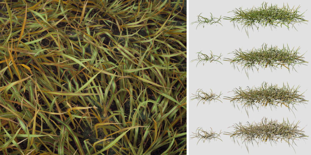 Tall Fescue: Grass Pack