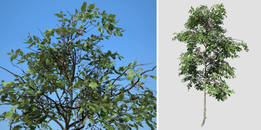 Zenii Magnolia (Desktop): Field