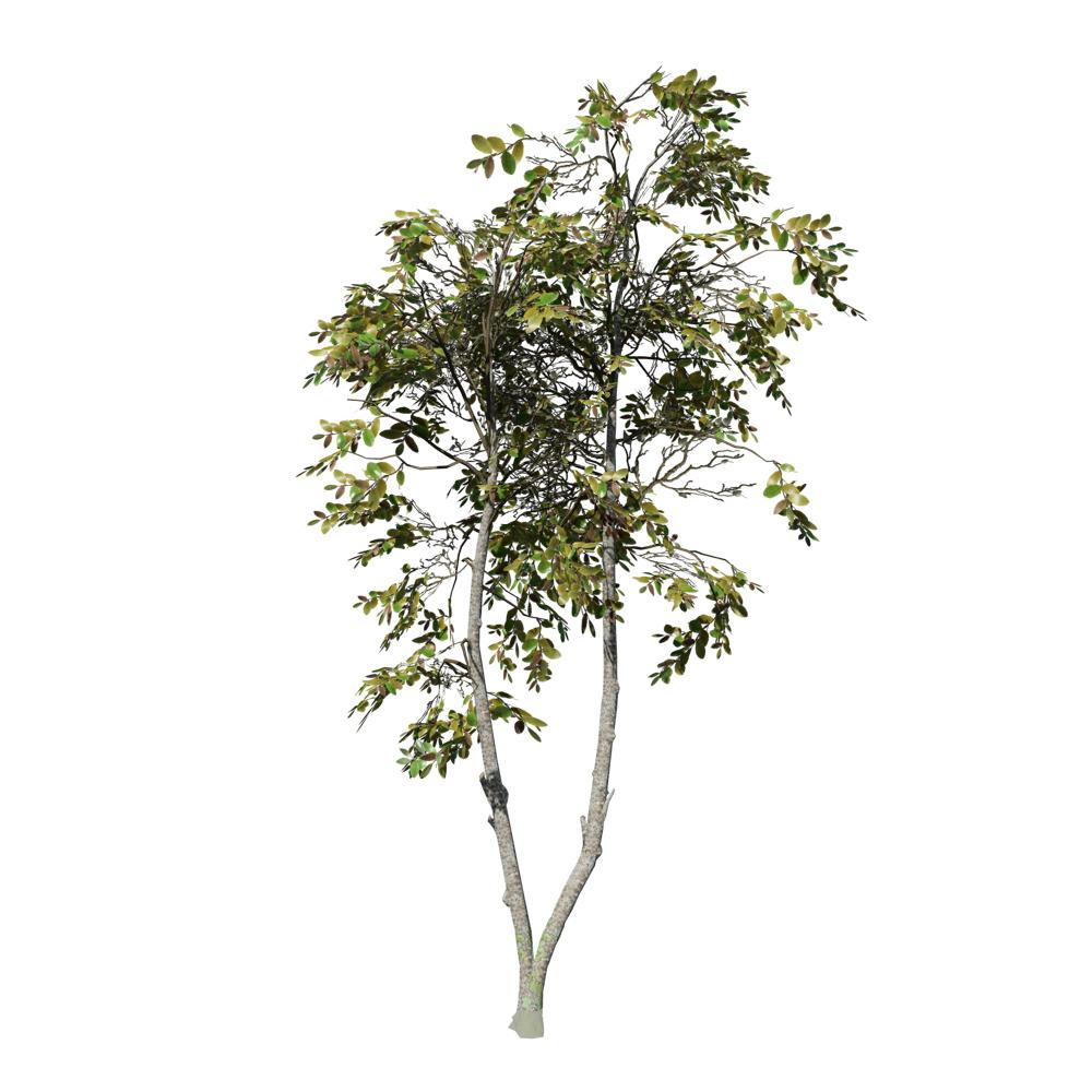 Zenii Magnolia (Desktop): Forest