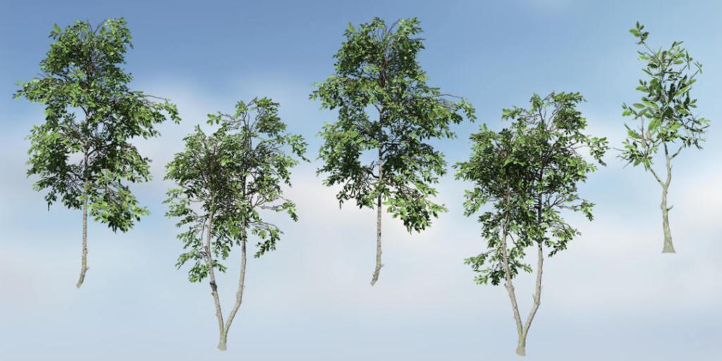 Magnolia Zenii Species Pack