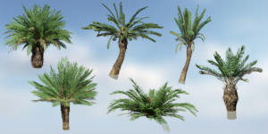 Sago Palm Pack (V8 VFX)