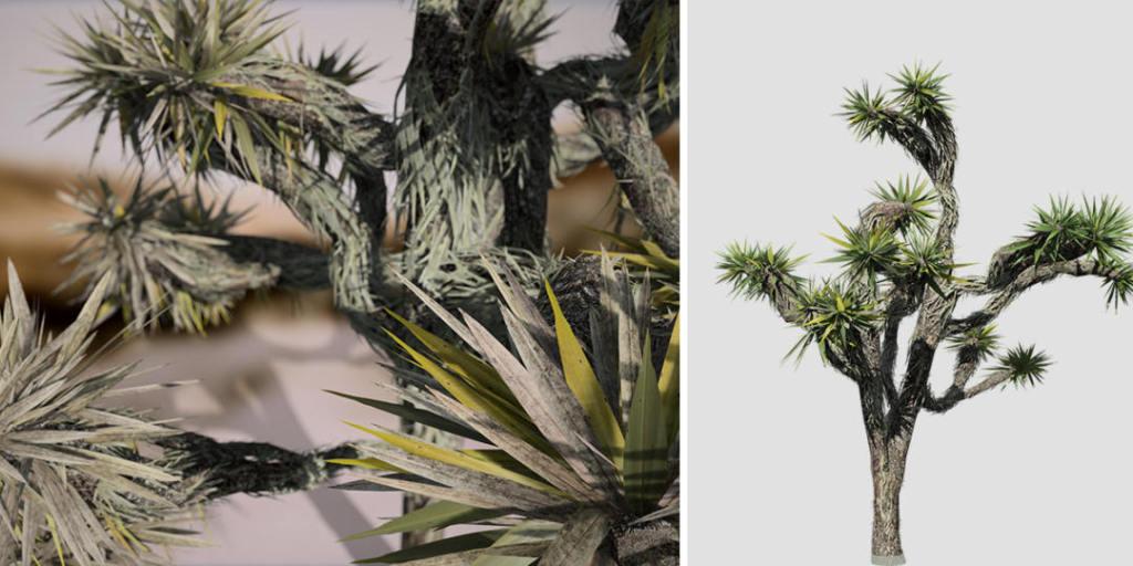 Yucca Palm: Desktop
