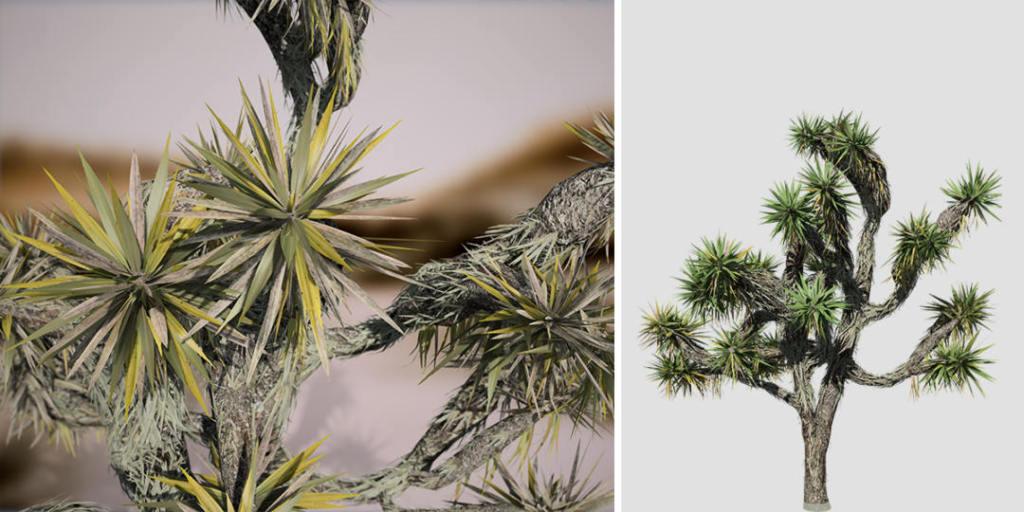 Yucca Palm: Hero