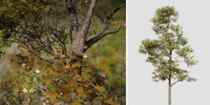 Sweetgum: Desktop Forest